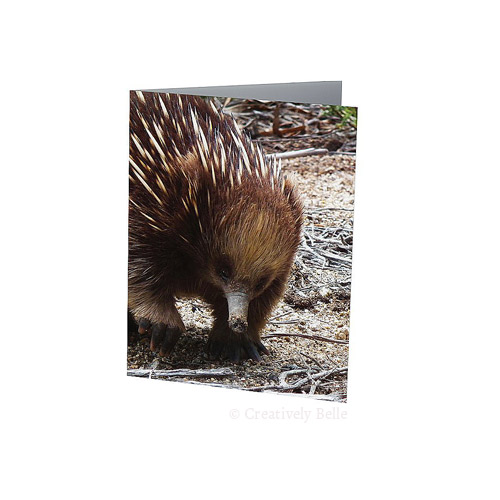 Australia Tasmanian Echidna Greeting Card Stationery by Creatively Belle and printed locally