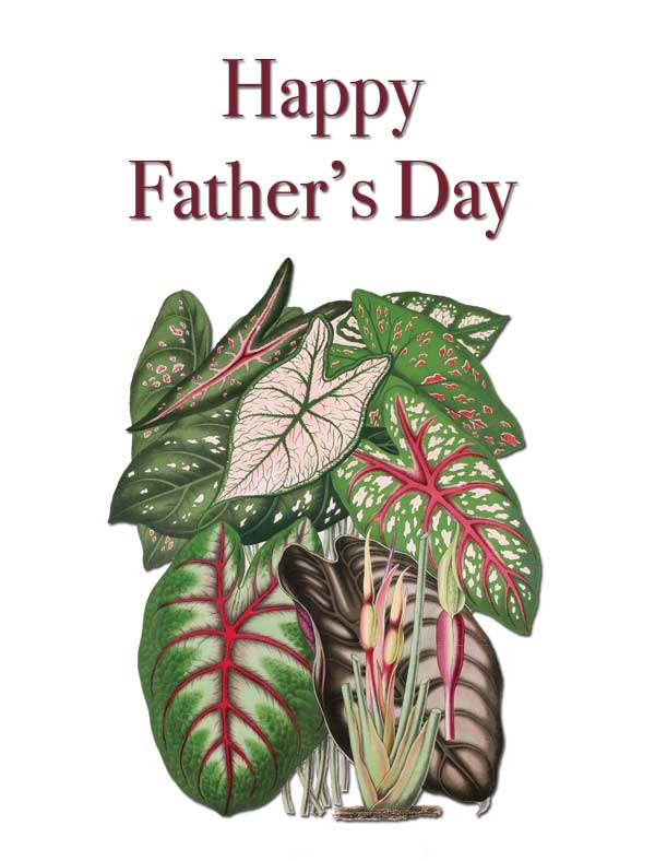 Happy Father's Day Vintage Botanical Series Caladium Leaves Greeting Card by Creatively Belle