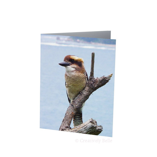 A happy life for this Australian Laughing Kookaburra at Mollymook Greeting Card