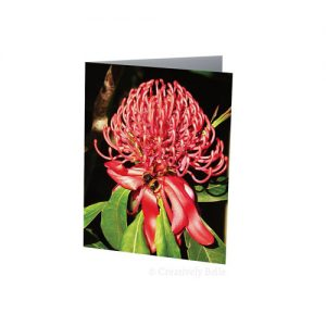 Waratah with Bumble Bee Greeting Card Stationery
