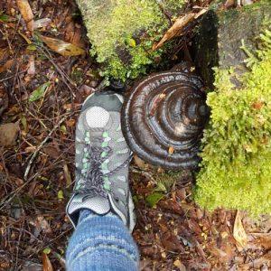 Amazing fungi in the Tarkine rain forest in the Tasmanian wilderness