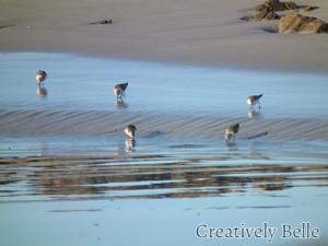 A family of rare birds on a Tarkin beach