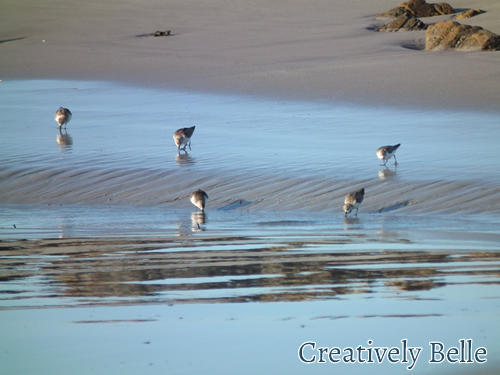 A family of rare birds on a Tarkin beach