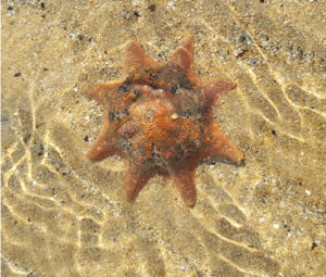 A starfish I found at Shearwater