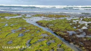 Finding your own path like water by Belinda Stinson of Creatively Belle