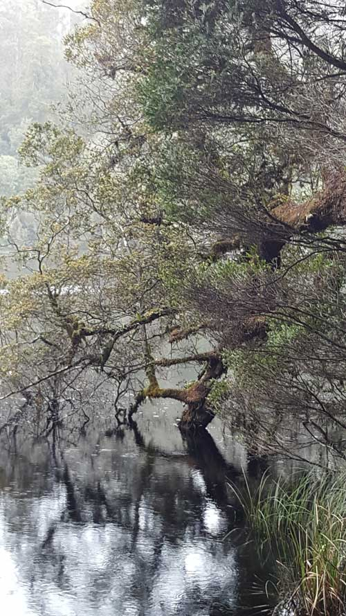Lake Chisholm in the Tasmanian Tarkine wilderness rain forest by Belinda Stinson of Creatively Belle