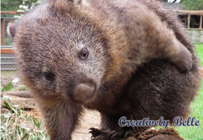 Lilly the Wombat