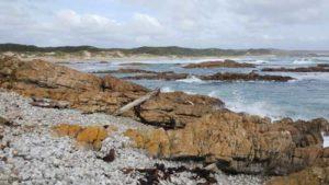 West Point State Reserve by Belinda Stinson in the Tasmanian Tarkine wilderness gift card range